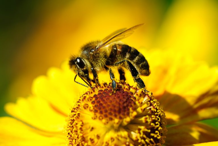 Pollen affects how quickly honey will crystallize